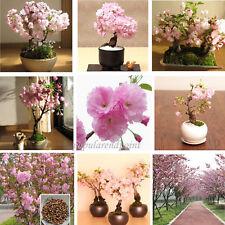 100 Japanese Cherry Blossom Tree Seed Bonsai Blossoms Sakura Flower Seeds CombSH