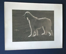 Black and White Print of Regal Dog Possibly Afghan Hound or Borzoi
