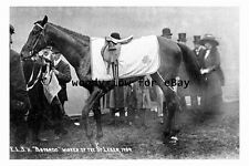 pt9212 - Doncaster Racecourse , The Leger Winner , Bayardo , 1909 - photograph