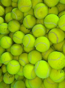 4 6 8 or 10 Used Tennis Balls For Dogs. All Branded Balls. VERY GOOD CONDITION