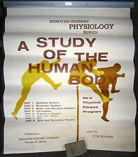 New listing Vintage Human Anatomy Chart