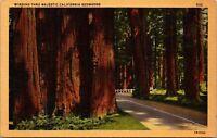 Vtg 1930's Road through Majestic Redwood Trees in California CA Postcard