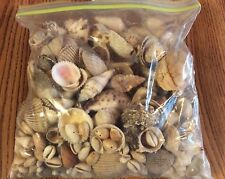 Lot of loose sea shell beads