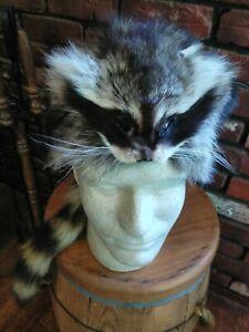 Real Raccoon Fur Hat Men's L Coonskin Cap Rendezvous Mountain Man Muzzleloader