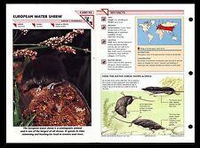 """European Water Shrew"" Wild Life Fact File Animal Card/Home School Study"