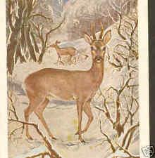 WILD DEER (LE CHEVREUIL),ANIMALS OF BELGIUM,POSTCARD