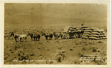 Antique Postcard shows Freight Team loading wool