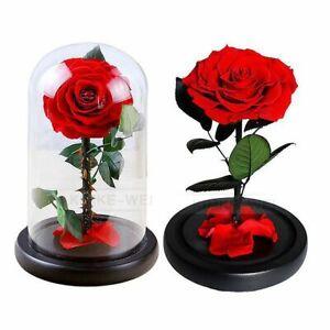 Konservierte Rose in Glasglocke Die Schöne und das Biest Belle Liebe Geschenk