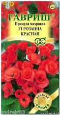 Primula Double Primrose terry seeds F1 Roseanne red Tm Gavrish - 5 seeds S1072