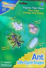 ANT LIFECYCLE egg, larva, pupa, adult life cycle plastic Minibeasts /  insects