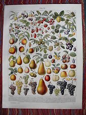 Fruit, peach, strawberry, grape..print...Larousse 1900s..$$$BUY 2, GET 1 FREE$$$