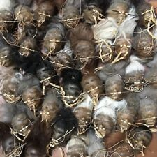 SHRUNKEN HEAD replica made from genuine rawhide leather FREE SHIPPING