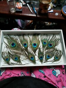 Peacock Feather Tray