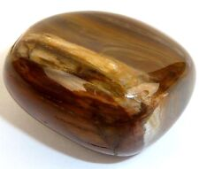 PETRIFIED WOOD Tumbled Stone - Strong Body, Patience, Inner Peace, Past-life Rec