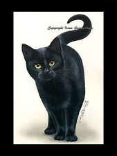Black Cat Print Amber Eyes by I Garmashova