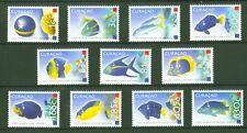 Curacao 2011 - Fische Fishes Poissons Pesci Pezes Peixes Snapper - Nr. 3-13