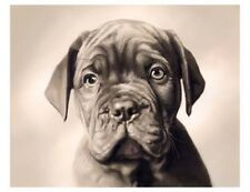 artav Dogue De Bordeaux Art Print on Watercolor Paper