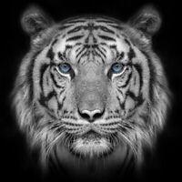 5D Full Drill Diamond Painting White Tiger Cross Stitch Kits Arts Decor Gifts