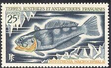 Fsat/TAAF 1971 Naranja-throated nototenia/pescado/Naturaleza/Marine/vida salvaje 1v (n23492)