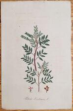 Mann Foreign Medicinal Plants Colored Folio Pistachio 1830