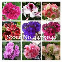 Rare Geranium Bonsai 50 PCS Seeds Apple Blossom Rosebud Pelargonium Plants 2019