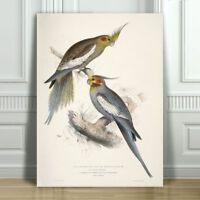 "EDWARD LEAR - Cockatiels - CANVAS ART PRINT POSTER - Bird Parrot - 24x16"""