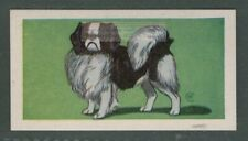 Japanese Spaniel Chin Dog Canine Pet Animal Trade Ad Card