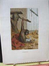Vintage Print,CHIMP+RABBIT,Prang,Animate Creation,1885,Chromo