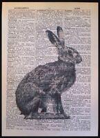 Vintage Hase Druck Original Antik Wörterbuch Seite Wandkunst Bild Kaninchen Grau