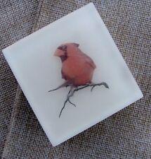 The Red Cardinal
