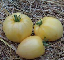 15 Graines/Seeds Tomate Blanche Ancienne - Variété : Coeur de Boeuf Blanc - BIO