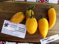 Sweet Cream Tomate - Tomato 10+ Samen - Saatgut - Seeds - Gemüsesamen