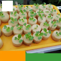 50pcs Cylinders Sponge For Hydroponic Seed Starting Grow Plant Net Pot Basket