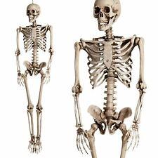 Boland 74515 - Skelett Ca. 160 Cm