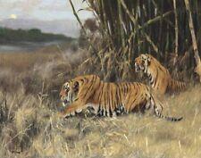 Kuhnert Wilhelm Two Stalking Tigers Print 11 x 14    #8956