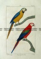 Antique Print 232-019 Parrots by Buffon c.1820 Birds