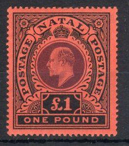 EDVII NATAL 1908-09. £1 purple & black/red. VLMM CAT £425