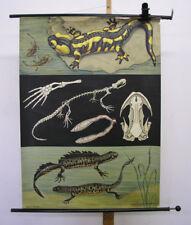 Beautiful Mural jkq Fire Salamander kammolche 83x113cm ~ 1965 Vintage Animals