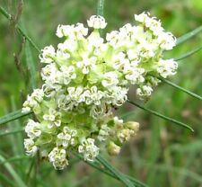 Whorled Milkweed Seeds binFr6