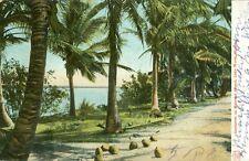Lake Worth, FL Coconuts on Munyons Island 1906