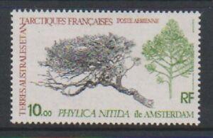 Französisch Antarktis - 1980, 10f Phylica Nitida Briefmarke - MNH - Sg 147