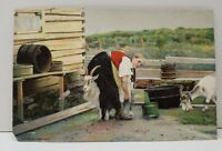 Danish Girl Feeding Goats Christmas Greetings c1910 Postcard B21