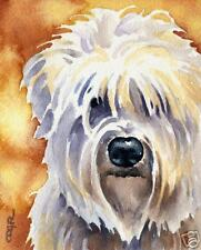 Soft Coated Wheaten Terrier Watercolor 8 x 10 Art Print Signed by Artist Djr