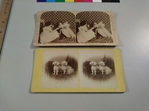 Dog Stereoview Photo cdii Unwilling Patient