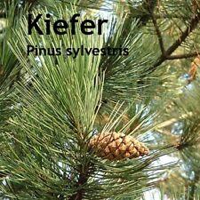 ***Kiefernöl, Kiefernnadelöl (Pinus sylv.) naturrein, 50ml , Topp!  Sauna-Öl