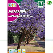Árbol jacaranda - sobre de semillas 0 5G