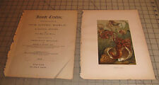 """1885 Hermit Crabs Animate Creation: Our Living World Color 9"""" x 12"""" Book Print"""