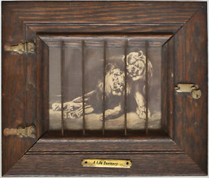 """Vintage Montage - Animal Rights - Art Statement: """"A Life Sentence"""" - Caged Lions"""