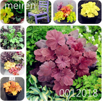 Colorful Heuchera 100 PCS Seeds Coral Bell Flowers Bonsai Plants Perennial 2019
