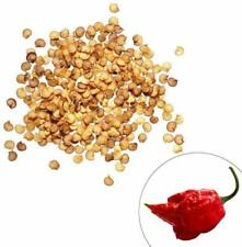 CAROLINA REAPER CHILLI SEEDS BEST QUALITY PEPPER 50 SEEDS PACK
